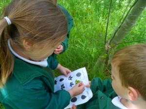 children looking for leaves outdoors